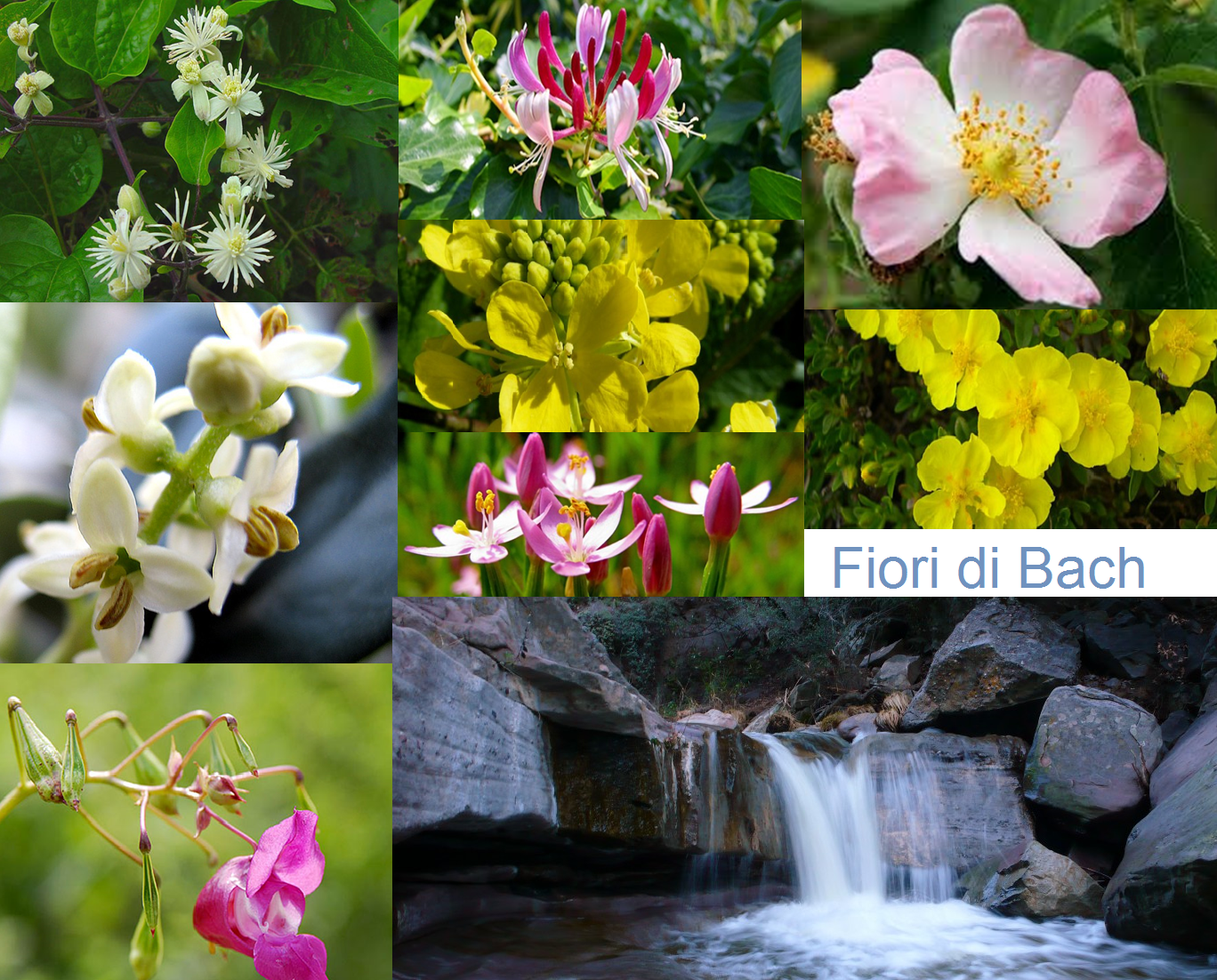 immagine da sostituire fiori di bach